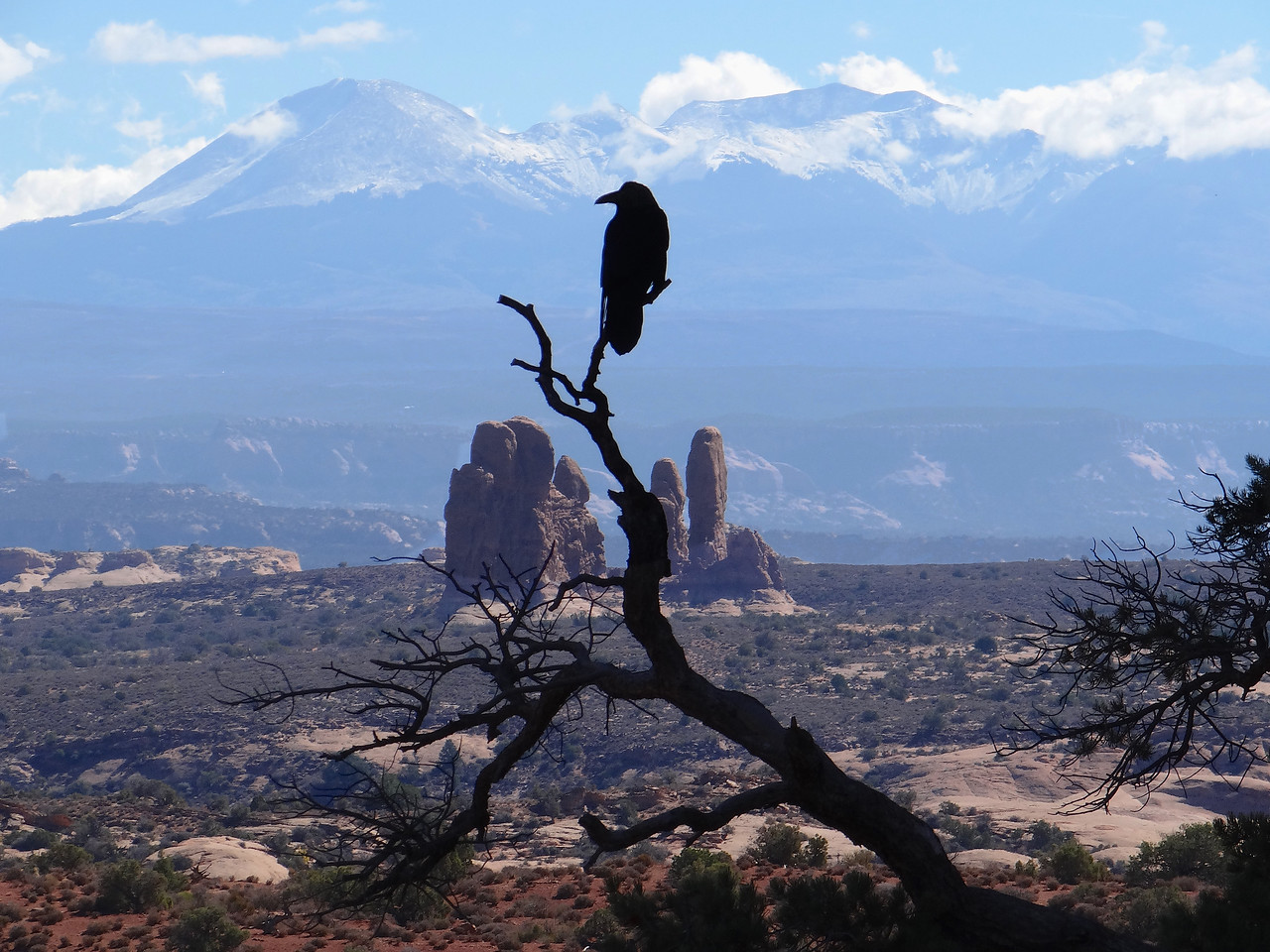 Raven taking in the La Sal mountains