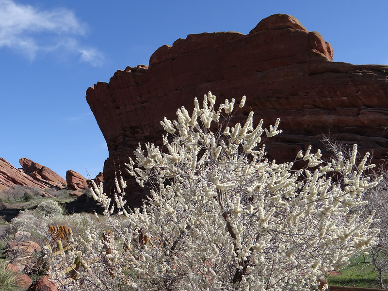 Red Rocks, wild plum