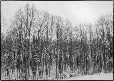 Snow Scenes - Series l (3)