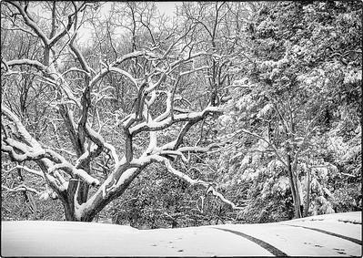 Snow Scenes - Series l (4)