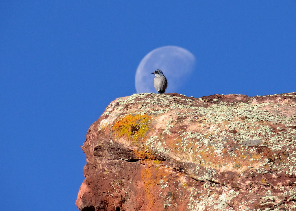 One lucky second- scrub jay, moon, red rocks
