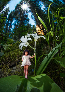#8 Fairy Girl and the Butterfly