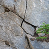 tree growing on cracked rock wall