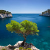 Lone pine tree growing out of solid rock in the Calanques near Cassis, Provence France