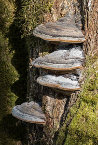 Tree Fungi at Nisqually Refuge