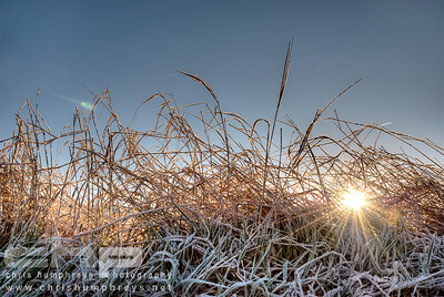 Dried grass on a frosty morning, Heriot, Scotland
