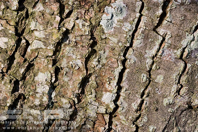 Bark detail 1, Heriot, Scotland