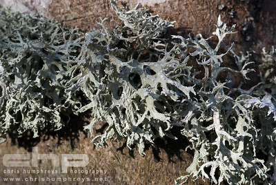 Lichen over bark, Heriot, Scotland