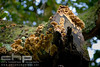 Fungi covered branch, Lake District, England