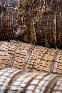 Bark detail 3, Edinburgh Botanics, Scotland