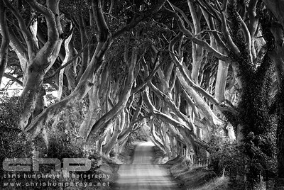 The Dark Hedges - County Antrim, Northern Ireland