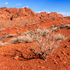 Valley of Fire Lone Bush