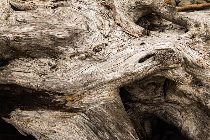 Ecola State Park Driftwood