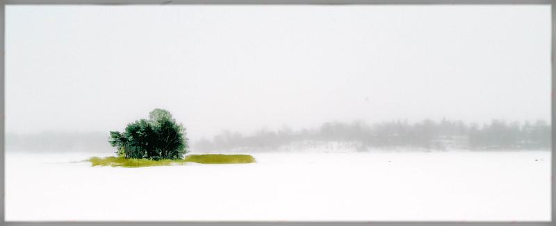 Tree Island in Snow Field