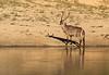 Kudu on shore P DSC_0004