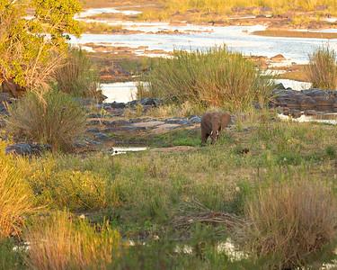 Elephant in sunlite field P 10x8 2July dsc_0003