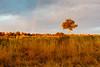 Landscape in Africa _V6Y5311