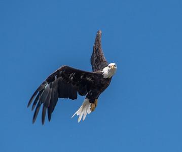 2019-07-20-Eagles-00472