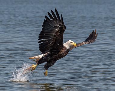 2019-07-20-Eagles-01671