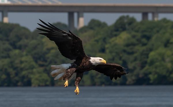 2019-07-20-Eagles-01657