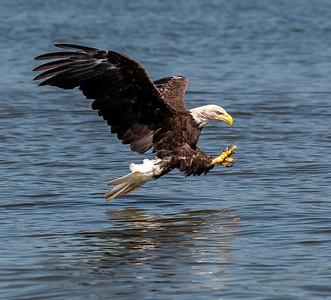 2019-07-20-Eagles-01669