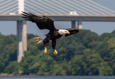 2019-07-20-Eagles-01655