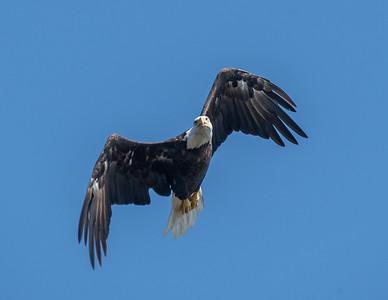 2019-07-20-Eagles-00533
