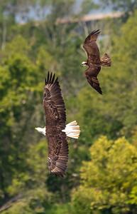 2019-07-20-Eagles-01759