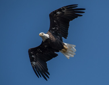 2019-07-20-Eagles-00547