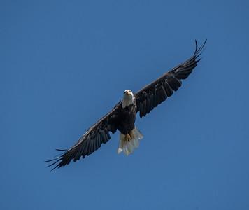 2019-07-20-Eagles-00535