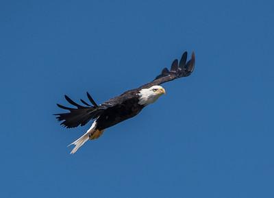 2019-07-20-Eagles-00465