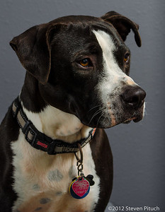 Adopted Dogs (and Cats) - Alumni