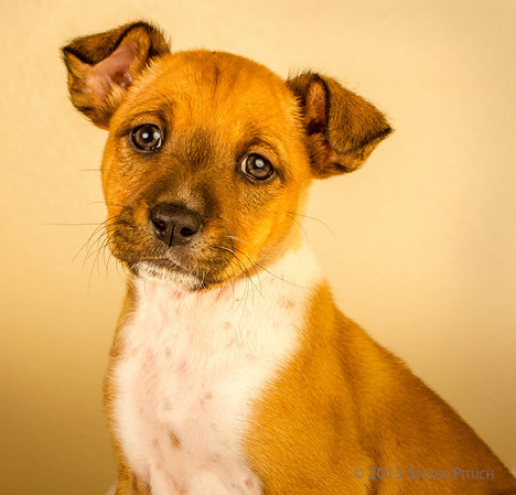Foster Dogs for Adoption
