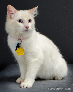 Foster Cats for Adoption