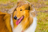 9/12/2012 - Corpus Christi Dog Group.