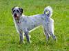 10/14/2012 - Ellie at the Corpus Christi Dog Group.