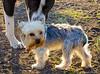 9/19/2012 - Corpus Christi Dog Group - Eli with a friend.