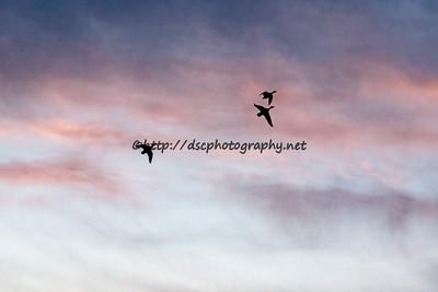 DSCPhoto_14455