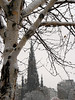 Birch tree and the Scott Monument in the snow