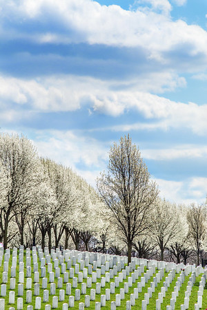Spring Blooms JB Cemetery, St Louis 4