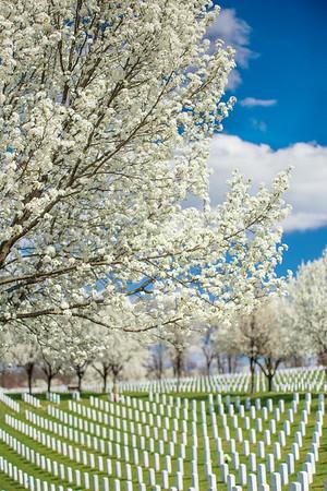 Spring Blooms JB Cemetery, St Louis 3
