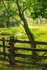 Horse Fence & Tree