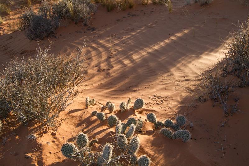 Sand Shadows