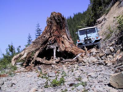 Stump pullin 4 000625.jpg (c) Dena Kent 2000