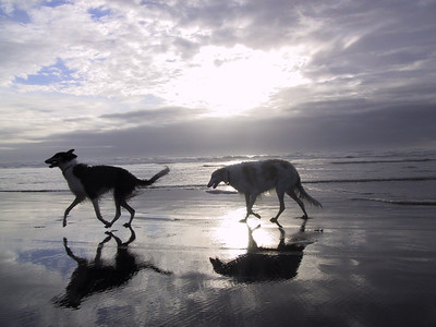 Beach buddies farley sorvan gearhart011018.jpg (c) Dena Kent 2001