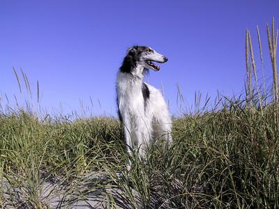 Misha stands dunes gearhart000510.jpg (c) Dena Kent 2000