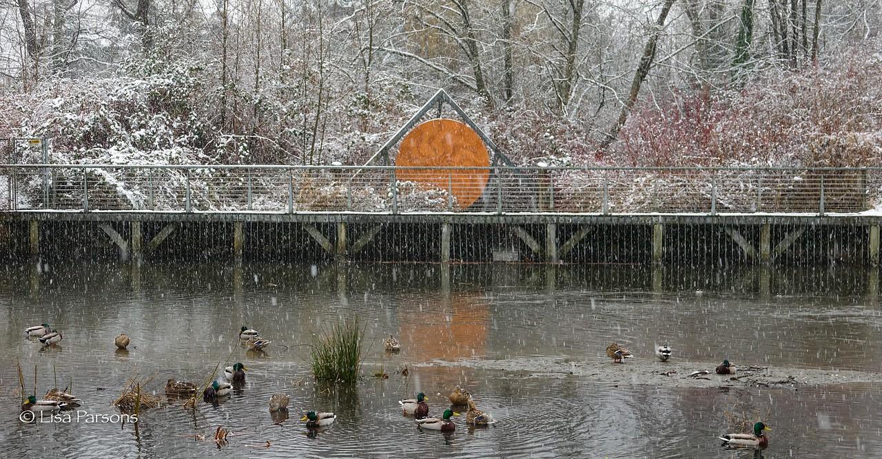 Winter in Meadowbrook Park