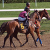 Jermaine Bridgmohan trots Typhoon Tycoon before the 9th race