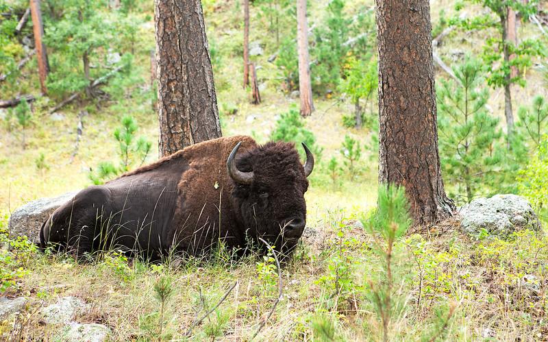 7486 Buffalo