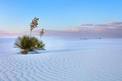 2448 White Sands
